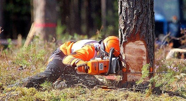 Всемирный чемпионат вальщиков леса