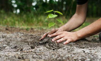 Итоги акции «Чистый лес».