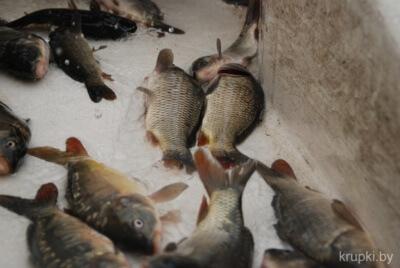7-302 рыба