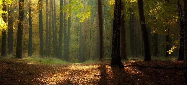 Порядок согласования удаления угрожающих деревьев