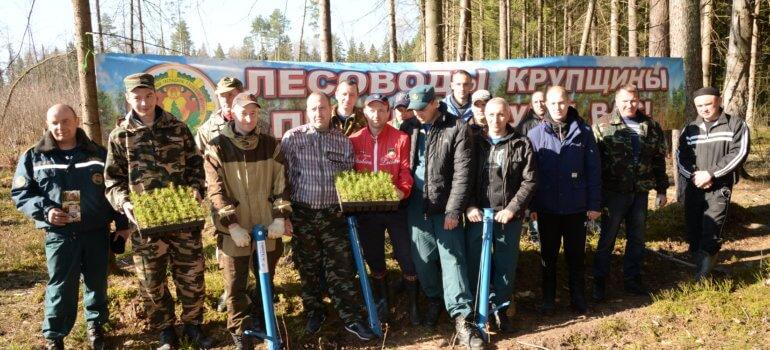 Итоги акции «Неделя леса 2017»