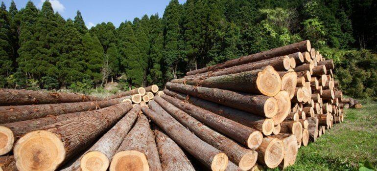 Продлено лицензирование экспорта некоторых видов лесоматериалов