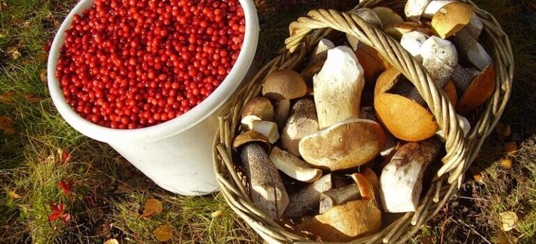В лесах ведется активная заготовка грибов и ягод