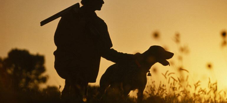 Cезон охоты на лося и оленя